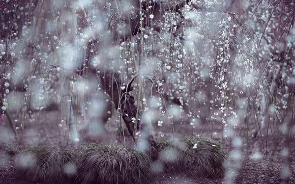 شکوفه های دیدنی (8)