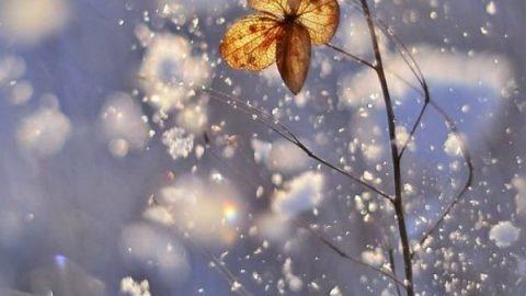 عکس های زیبا و حیرت انگیز از طبیعت با لنز ماکرو!