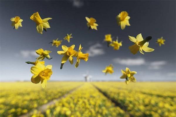 جاذبه گل ها (1)