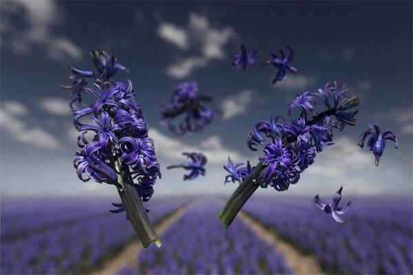 جاذبه گل ها (3)