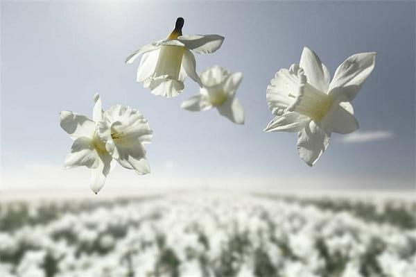 جاذبه گل ها (4)