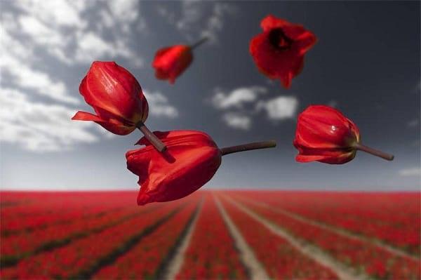 جاذبه گل ها (5)