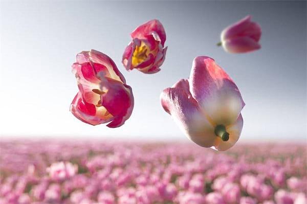 جاذبه گل ها (6)