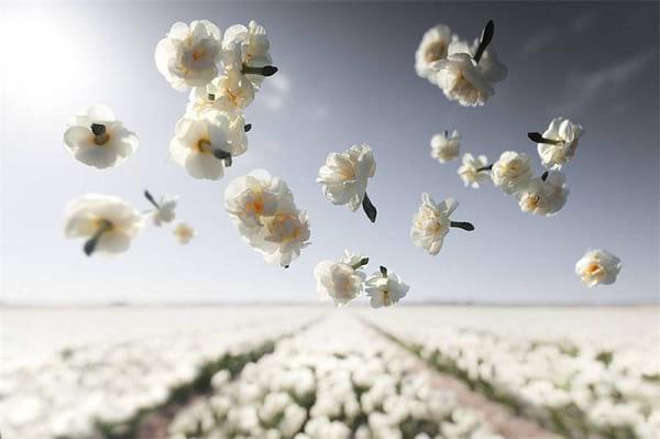 جاذبه گل ها (7)