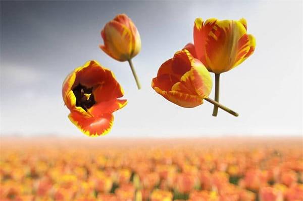 جاذبه گل ها (9)