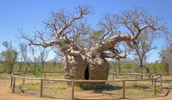 درخت زندان (1)