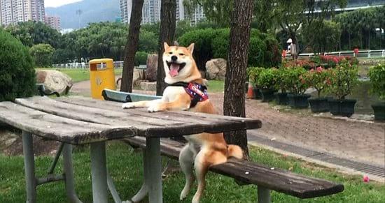 سگ بامزه (1)