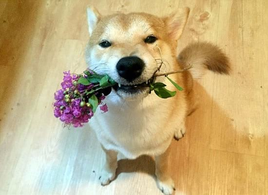 سگ بامزه (4)