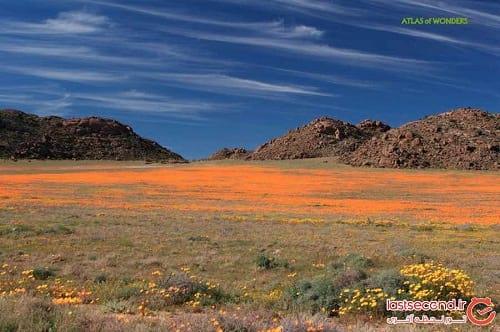 صحرای گل (13)