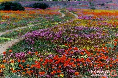 صحرای گل (2)