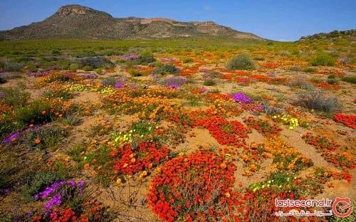 صحرای گل (4)