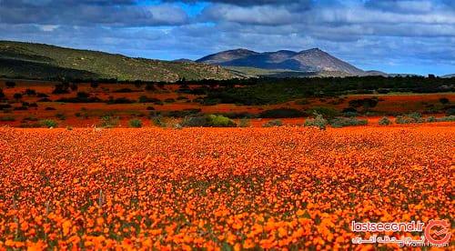 صحرای گل (5)