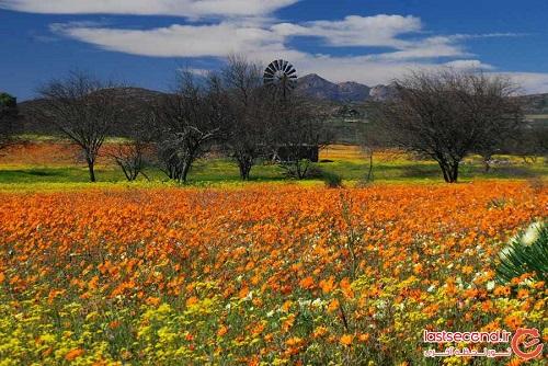 صحرای گل (6)