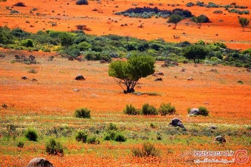 صحرای گل (7)