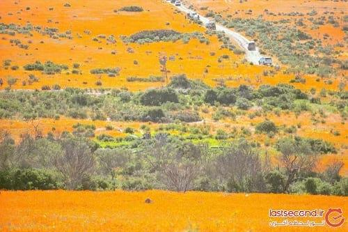 صحرای گل (9)