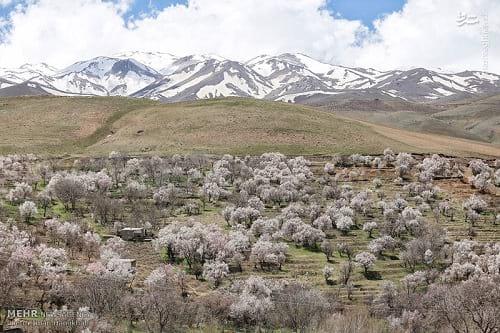 طبیعت بهاری همدان (1)