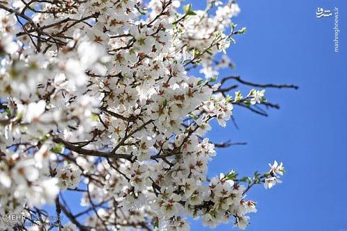 طبیعت بهاری همدان (13)