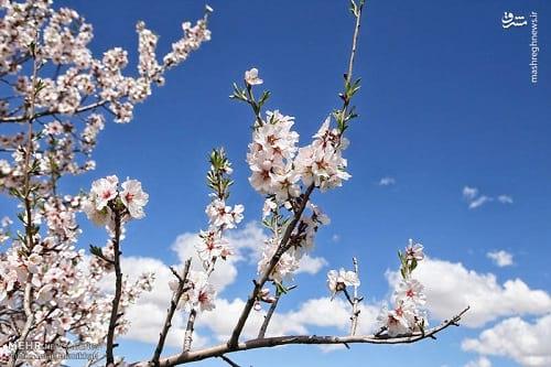 طبیعت بهاری همدان (15)