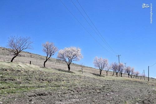 طبیعت بهاری همدان (2)