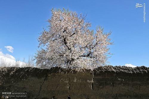 طبیعت بهاری همدان (3)