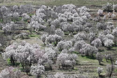 طبیعت بهاری همدان (5)