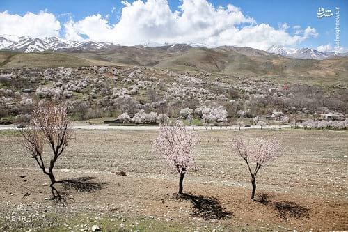 طبیعت بهاری همدان (6)