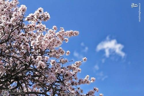 طبیعت بهاری همدان (7)
