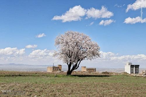 طبیعت بهاری همدان (8)
