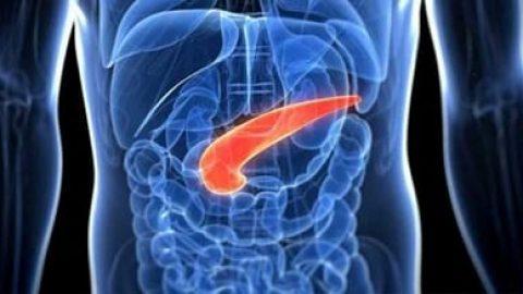 کشف سلول های جدید تولید کننده انسولین در لوزالمعده
