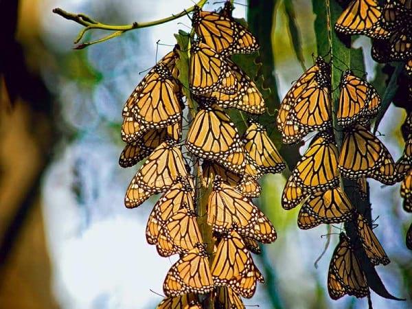 پروانه شهریار (1)