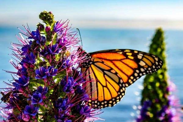 پروانه شهریار (11)
