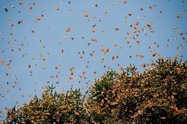 پروانه شهریار (14)