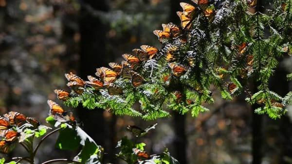 پروانه شهریار (2)