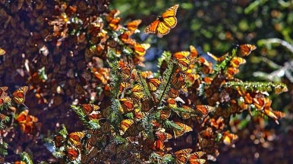 پروانه شهریار (3)