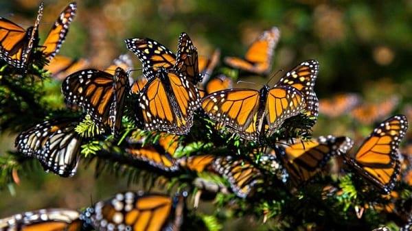 پروانه شهریار (6)