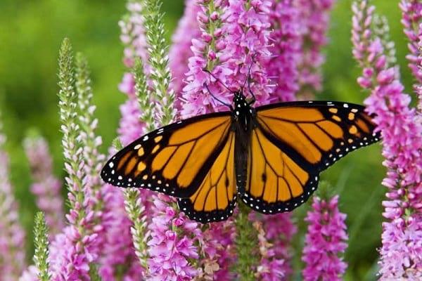 پروانه شهریار (8)