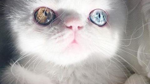 گربه ای با چشمان جادویی