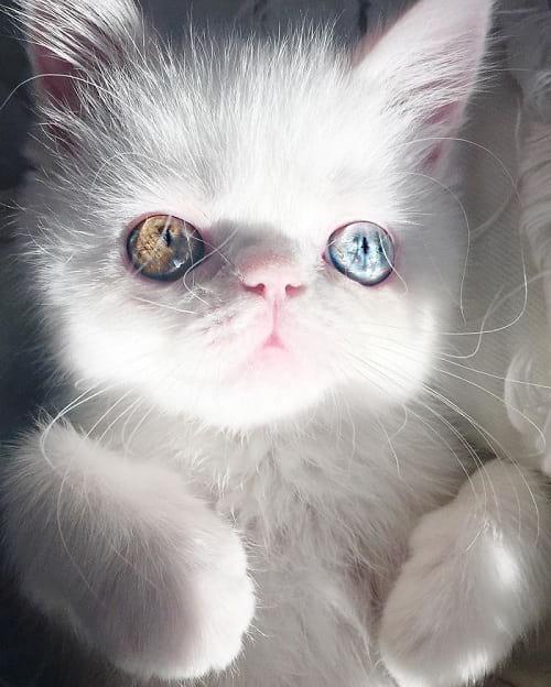گربه ای با چشمان جادویی (1)