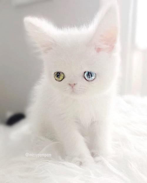 گربه ای با چشمان جادویی (2)