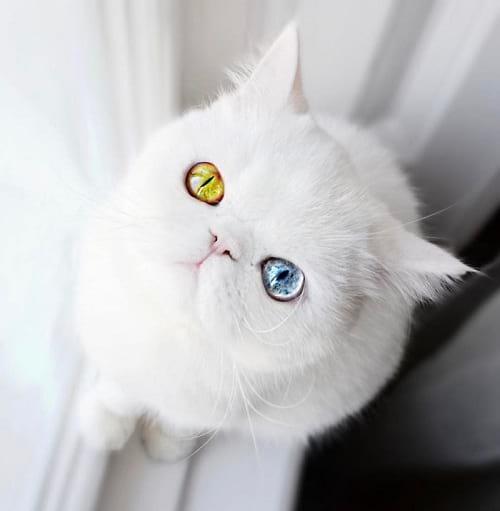 گربه ای با چشمان جادویی (3)