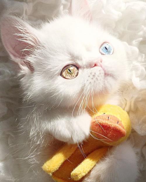 گربه ای با چشمان جادویی (4)
