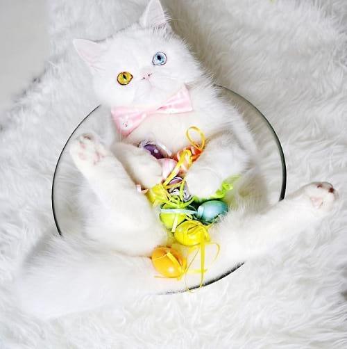 گربه ای با چشمان جادویی (5)