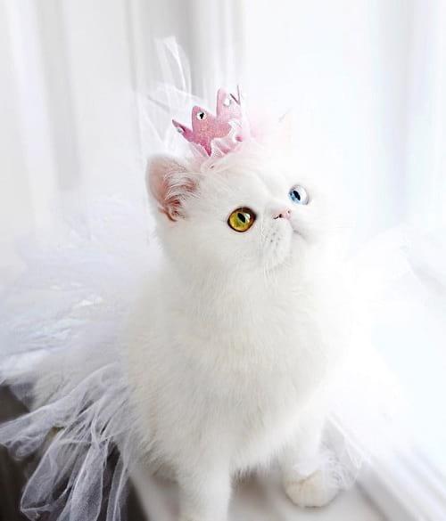 گربه ای با چشمان جادویی (6)