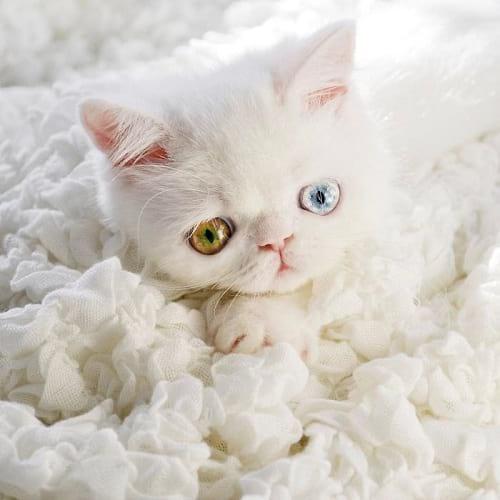 گربه ای با چشمان جادویی (7)