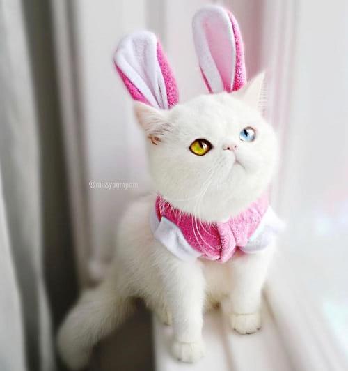 گربه ای با چشمان جادویی (8)