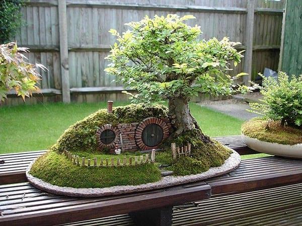 درختچه های بنسای (2)