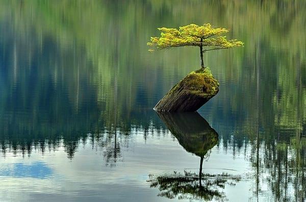 درختچه های بنسای (3)