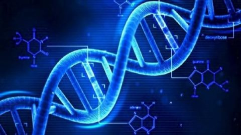 تشخیص ورزش و رژیم غذایی مناسب یک فرد با آزمایش DNA!