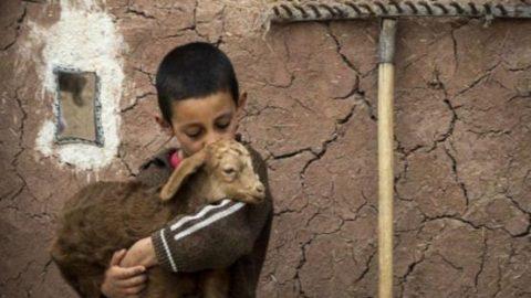 عکاس ایرانی با این عکس برنده مسابقه جهانی شد