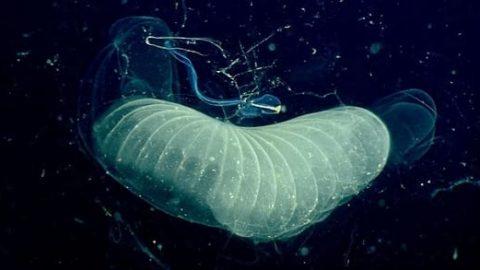کشف کرم آبی که دیاکسیدکربن میخورد!
